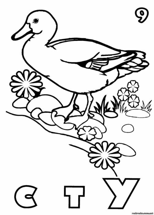 Utka 9 раскраска утка раздел животные